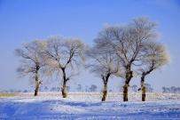 长白山 雾凇 魔界 ——雪乡童话世界